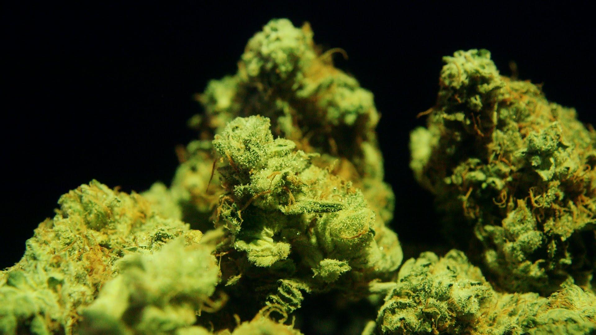 Cannabis Up Close #4: Gorilla Glue Number 4 (Hybrid) – Strain Review