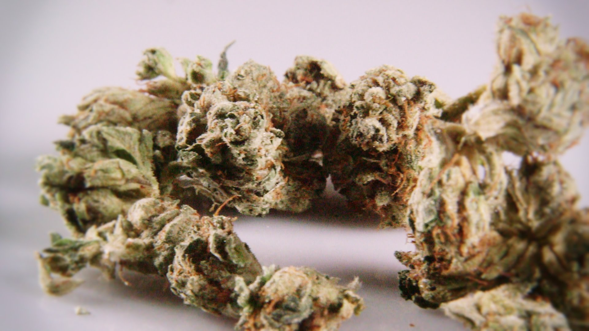 Cannabis Up Close #5: Famous Larry OG (Indica) – Strain Review